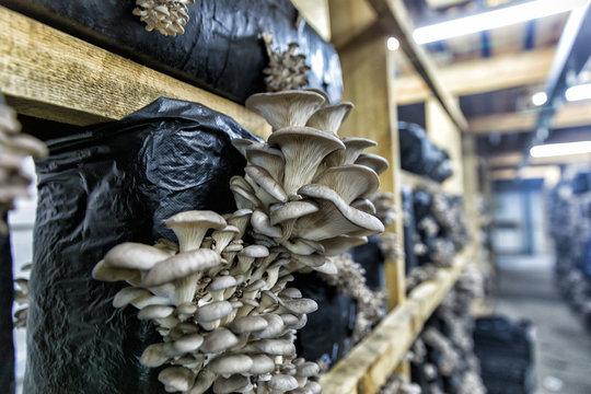 Mushroom Business Seminars